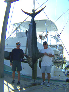 Blue-Marlin-caught-of-Hatteras-NC-on-Reliance-charter-boat